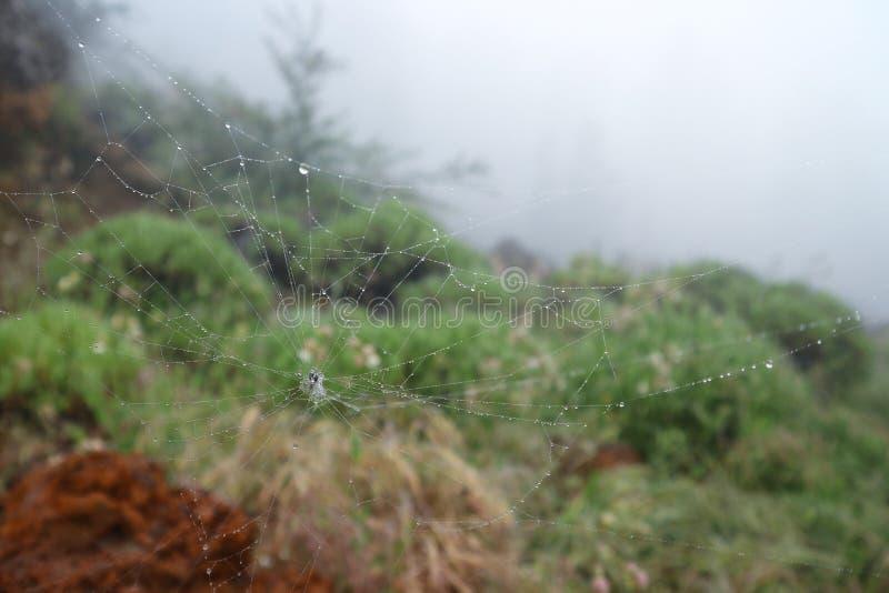 Spindeln förtjänar med droppar av dagg i dimmigt väder arkivbilder