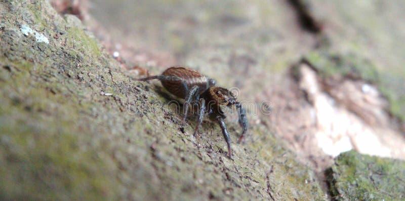 spindeln går på ett träträd fotografering för bildbyråer