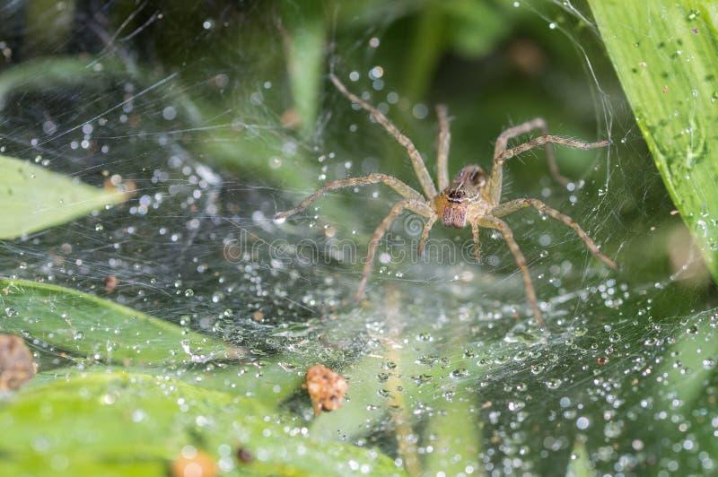 Download Spindeln I Den Oskarpa Naturliga Bakgrunden Arkivfoto - Bild av netto, wild: 76703788