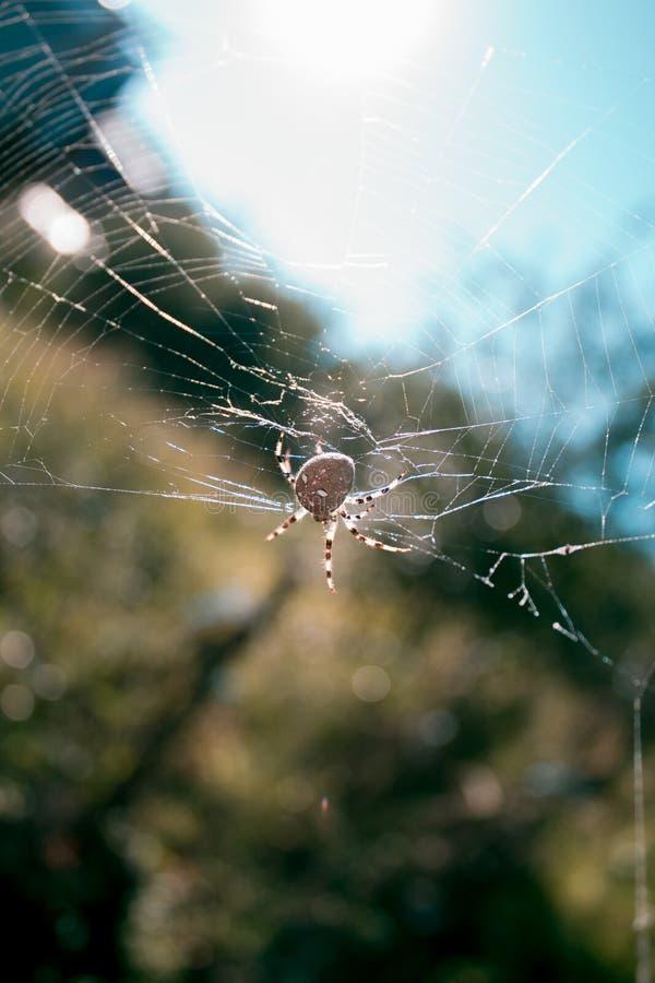 Spindeln på skönheten för rengöringsduksolskendagen förtjänar royaltyfria bilder
