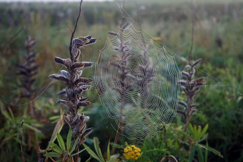 Spindelns nät royaltyfri foto