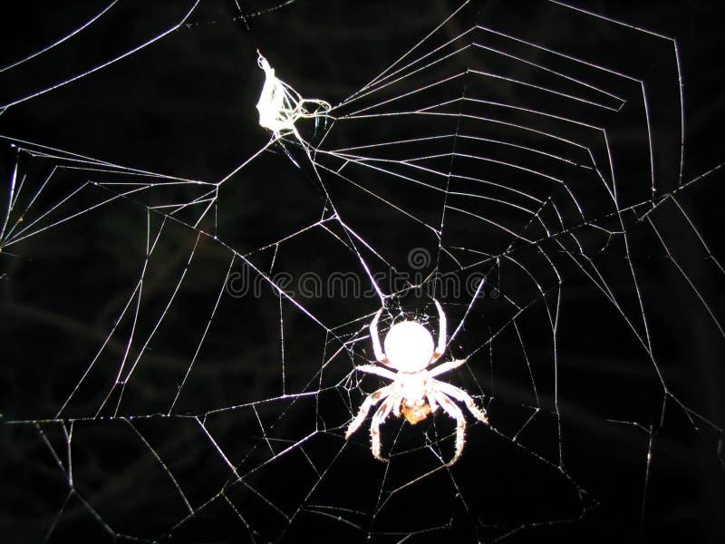 spindeloffer royaltyfria bilder
