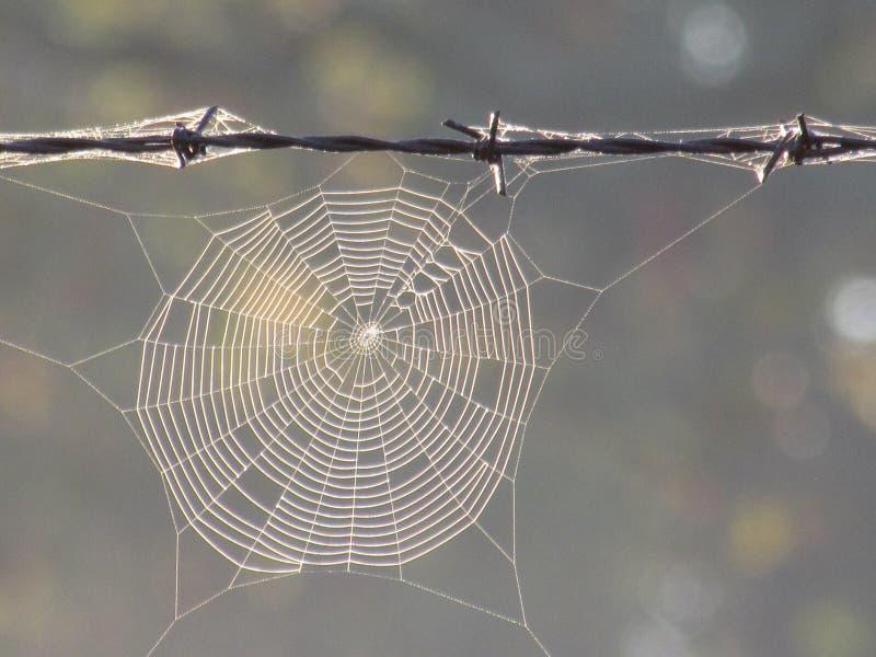 Spindelrengöringsduk i dimma som hänger på Barbed - tråd royaltyfri foto