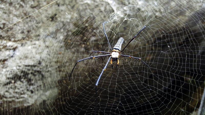 Spindelrengöringsduk i natur royaltyfri fotografi