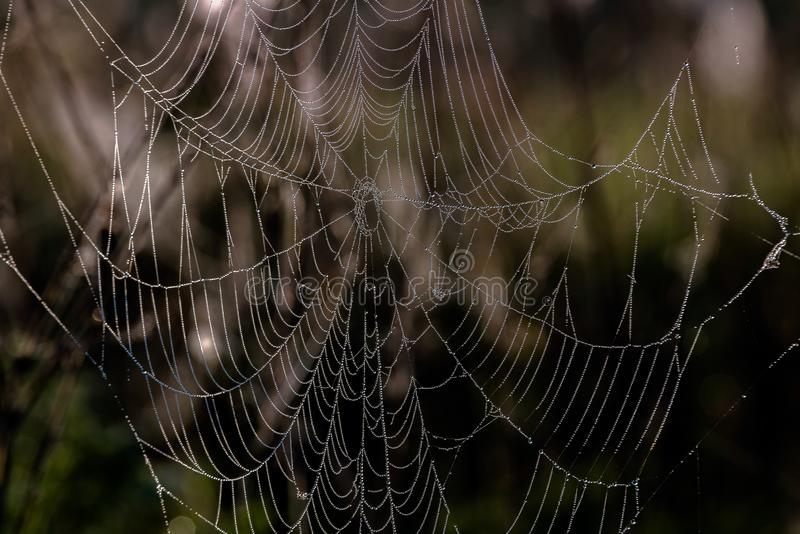 Spindelrengöringsduk med morgondagg som hänger på gräset i fälten Abstrakt modell av spindelrengöringsduken som täckas med regnsm arkivbilder