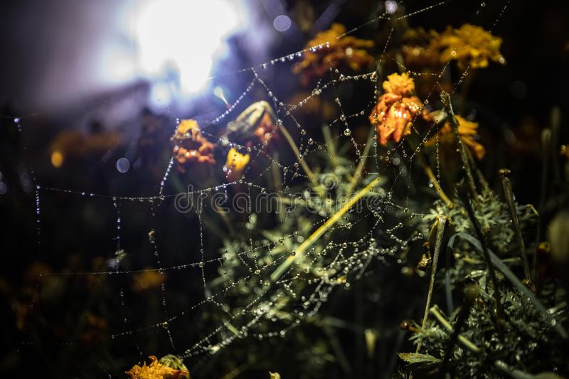 Spindelrengöringsduk med närbild för daggdroppar Naturlig bakgrund, nattplats Spindelnät spiderweb med vattendroppe royaltyfria foton