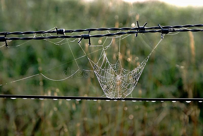 Spindelrengöringsduk på staketet royaltyfria bilder