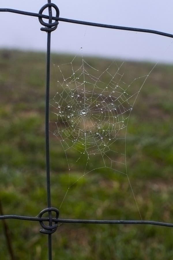 Spindelrengöringsduk på staketet i den kalla morgonen arkivbilder