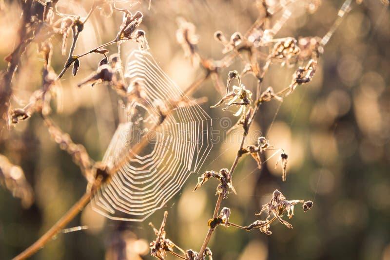 Spindelrengöringsduk på växten arkivbild