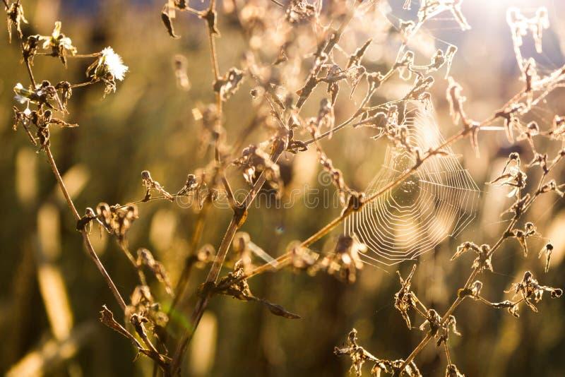 Spindelrengöringsduk på växten royaltyfri fotografi