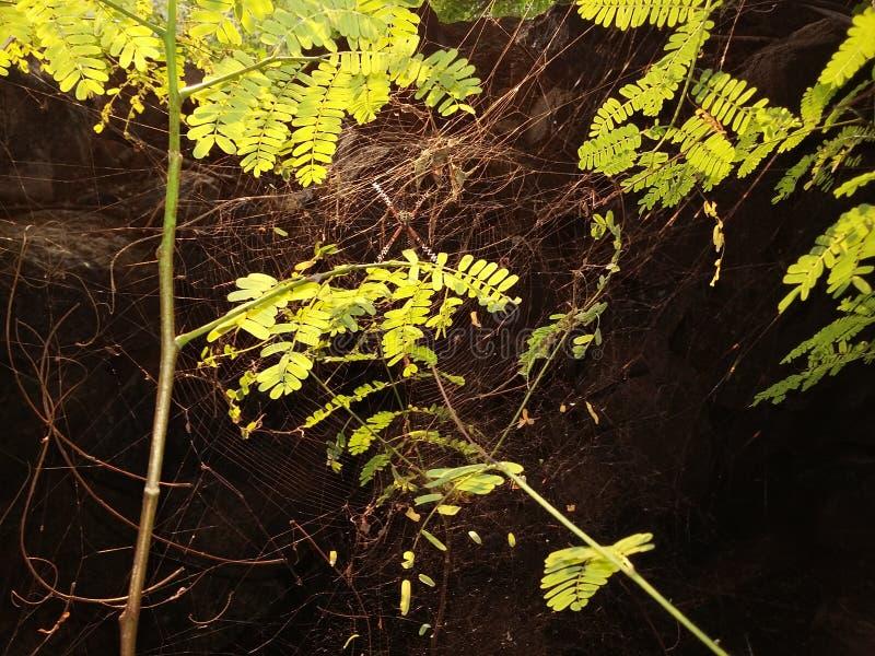 Spindelrengöringsduken över det gröna bladet royaltyfria foton