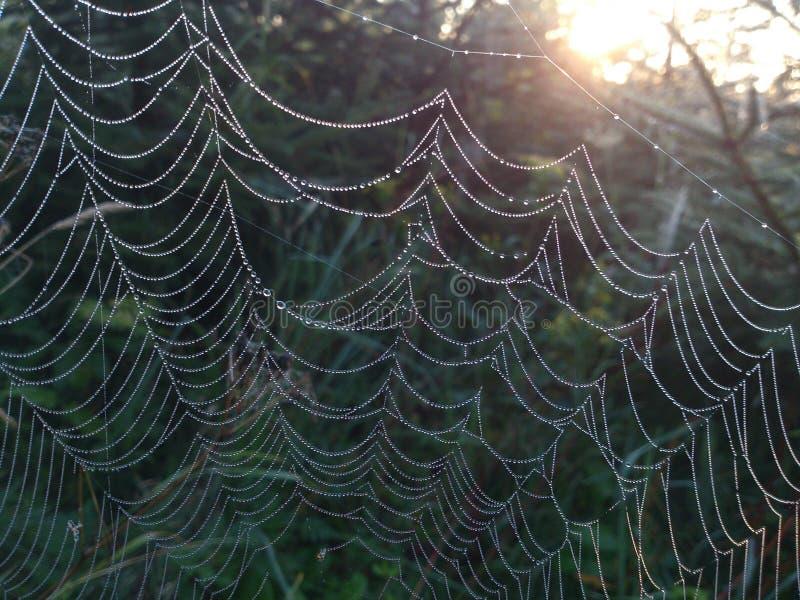 Spindelrengöringsduken arkivfoton