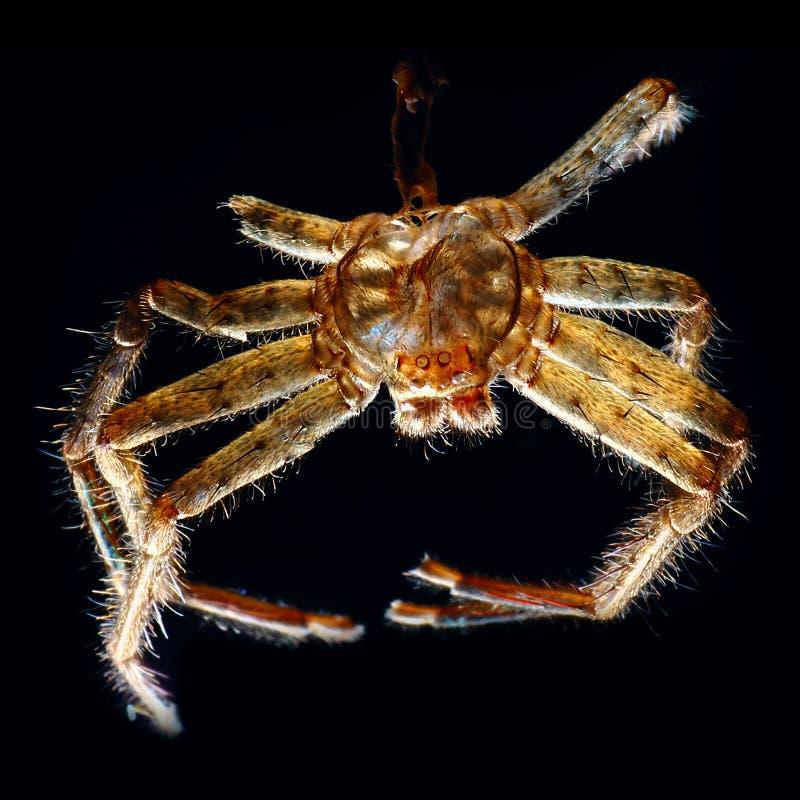 Spindelruggning arkivbild