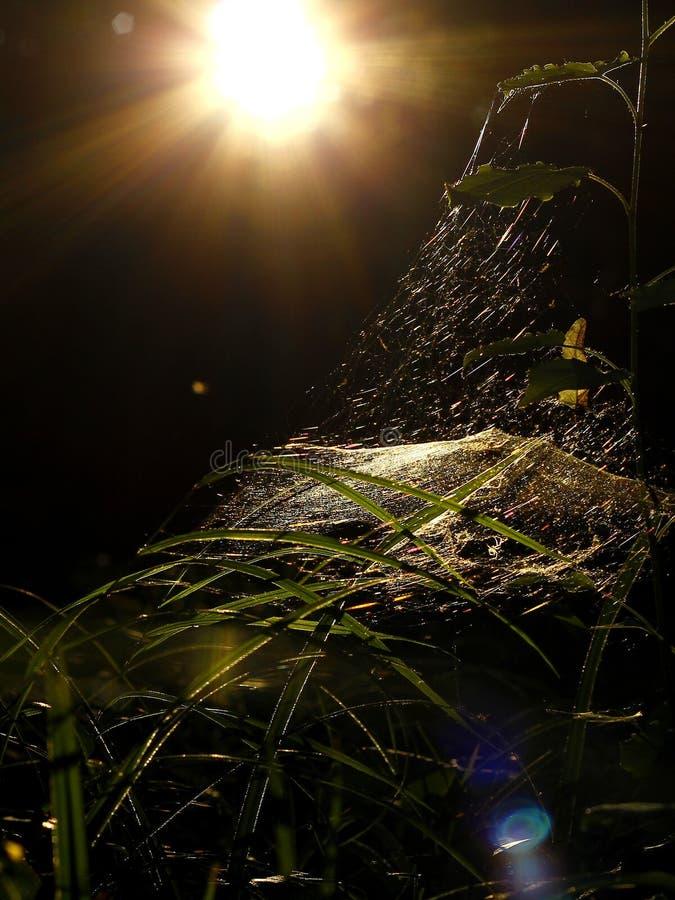 Spindels rengöringsduk arkivbilder