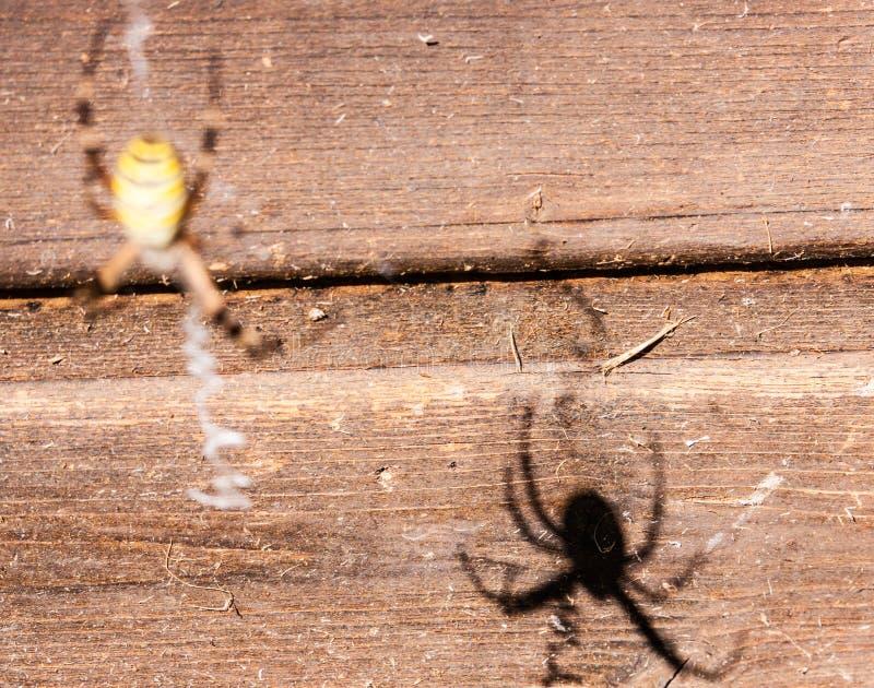 Spindels skugga på trät royaltyfria bilder