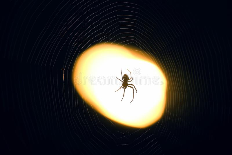 Spindelsammanträde på en rengöringsduk på natten under ljuset av en lykta royaltyfria bilder