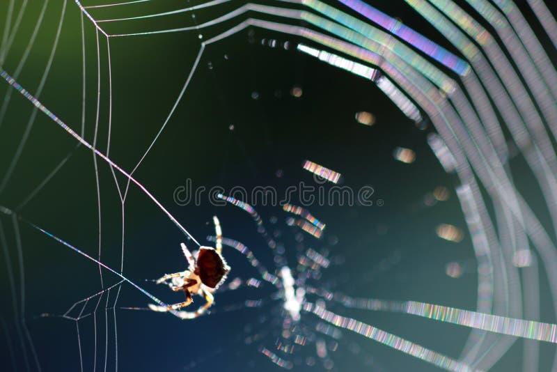 spindelspiderweb royaltyfria foton
