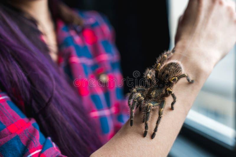 Spindeltaranteln kryper på handen för flicka` s arkivfoton