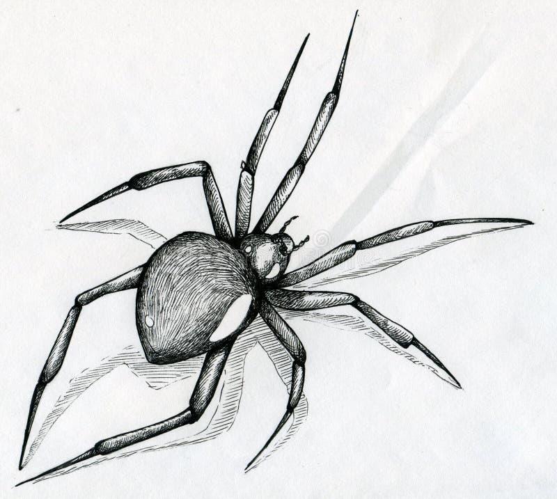 Spindelteckning för svart änka vektor illustrationer