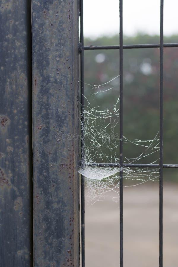 Spindelvävstol i stänger royaltyfria foton