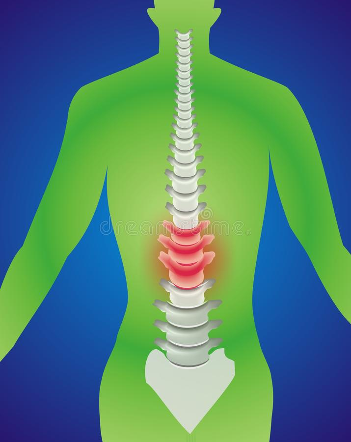 Free Spine Stock Images - 12483924