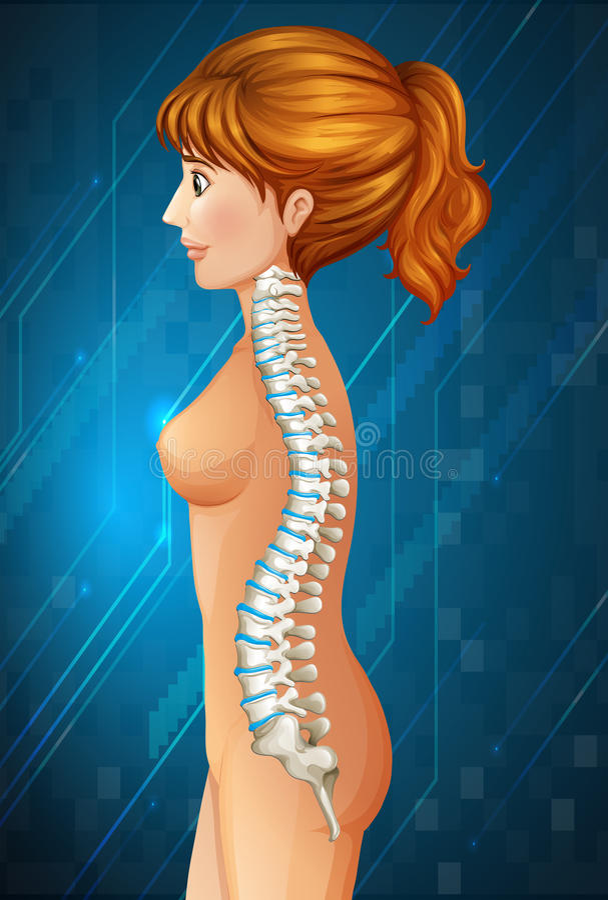 Spine diagram in detail. Illustration vector illustration
