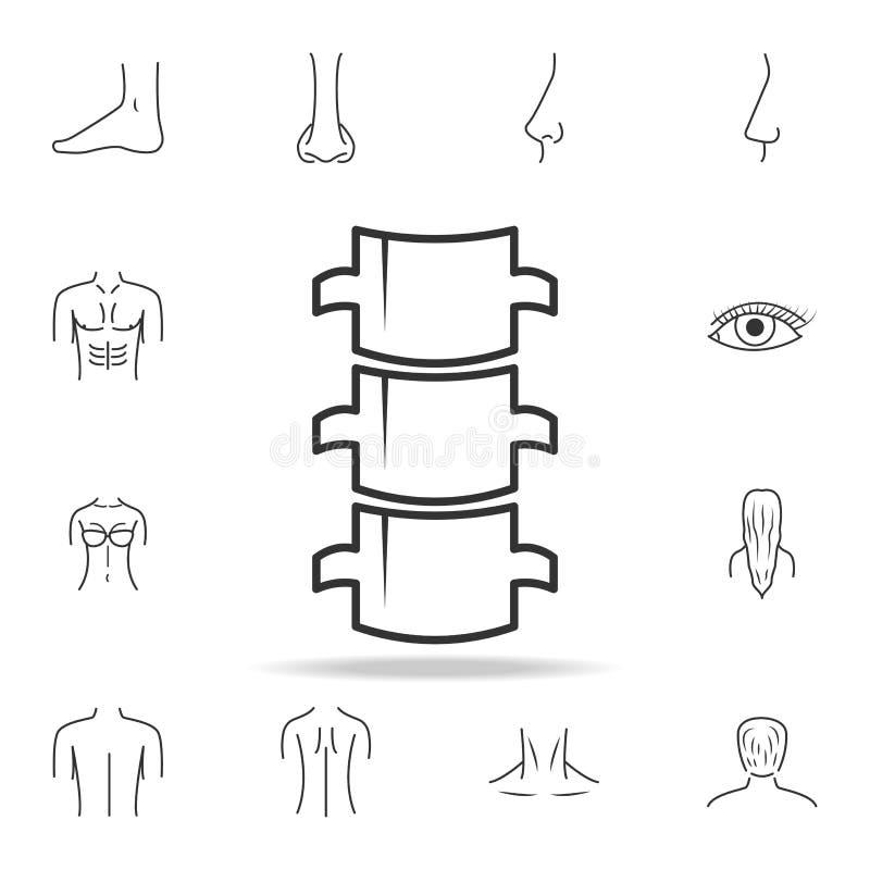 Spine Flat Icon. Detailed Set Of Human Body Part Icons. Premium ...