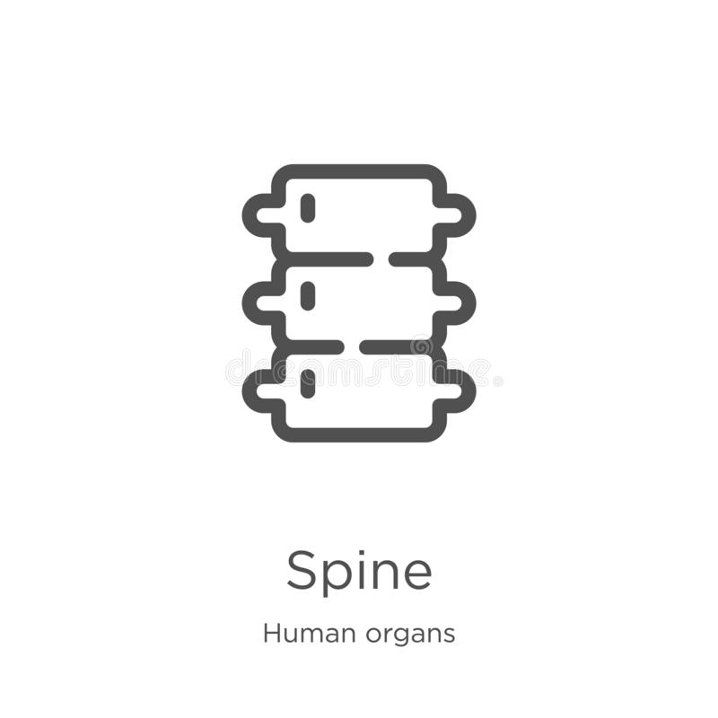 spine icon vector from human organs collection. Thin line spine outline icon vector illustration. Outline, thin line spine icon royalty free illustration