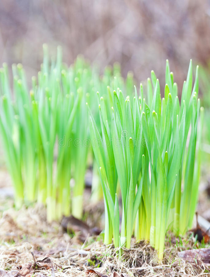 Download Sping is coming stock image. Image of park, soil, plant - 14145105