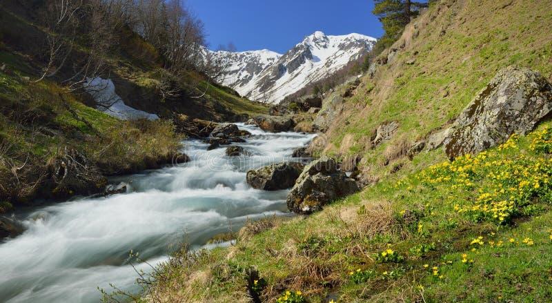 Sping i Kaukasus arkivfoto
