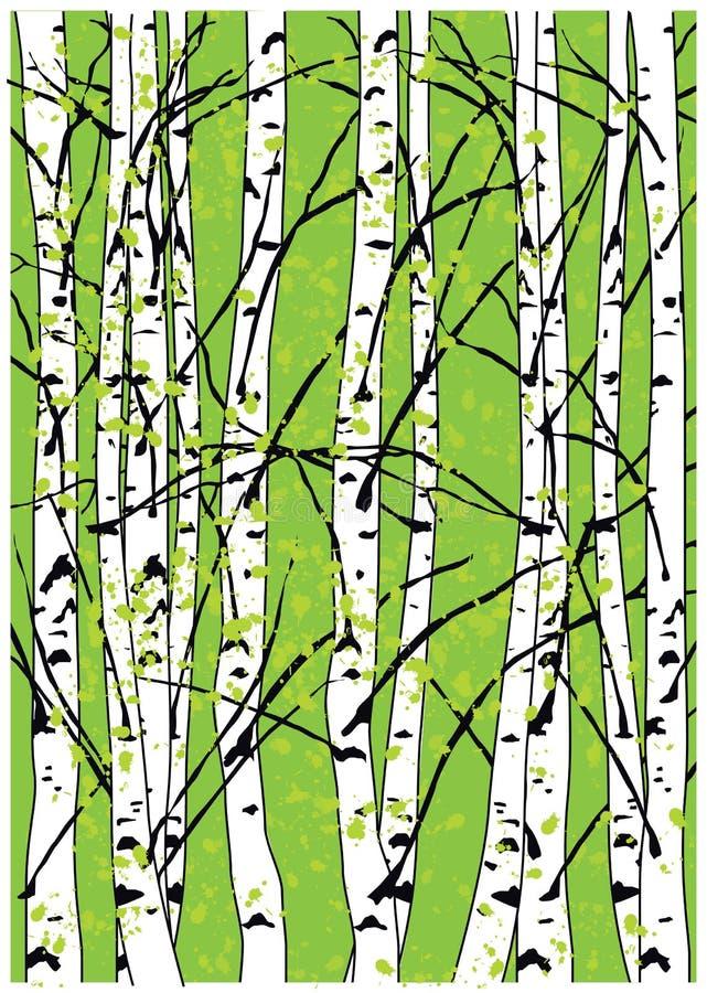 Sping wektorowa ilustracja bukowych drzew brzozy lasowi Piękni drzewa zdjęcia stock
