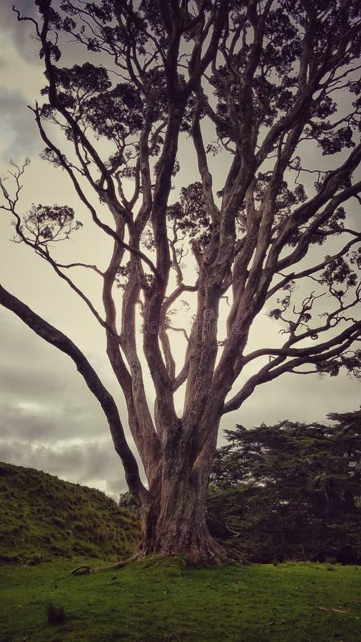 Spinkigt träd arkivbilder