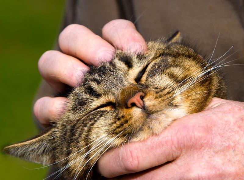 spinna för kattunge fotografering för bildbyråer