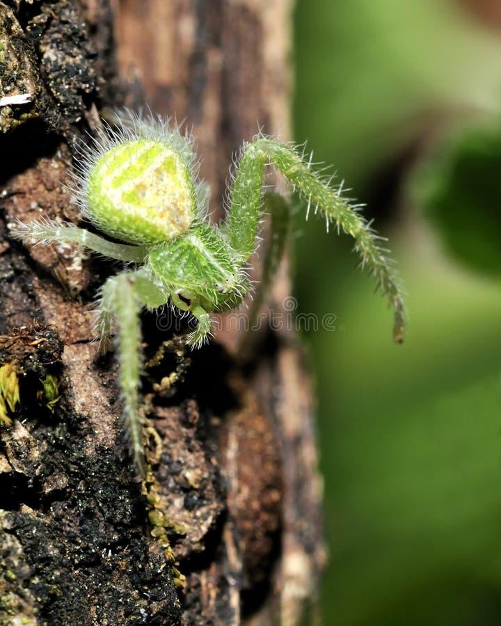 Spinne stockfotos