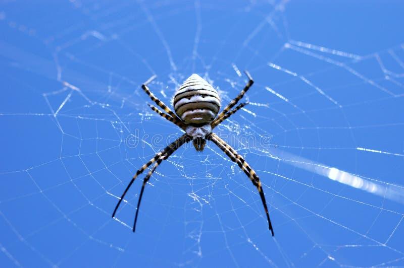 Spinne stockfoto