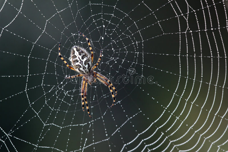 Spinne lizenzfreies stockbild