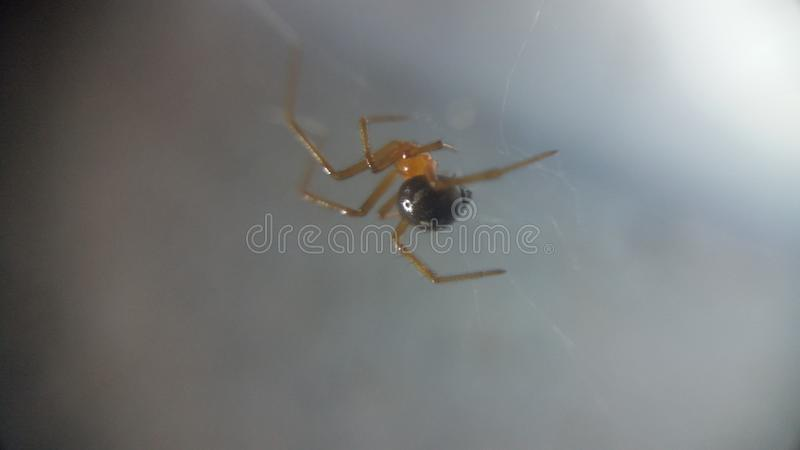 spinne stockfotografie