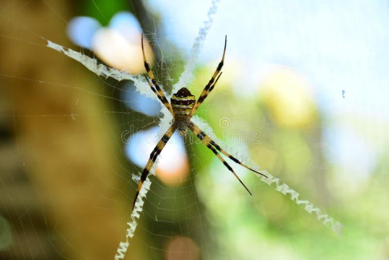 Spinne auf dem Netzblick gruselig und furchtsam auf Naturhintergrund stockbild