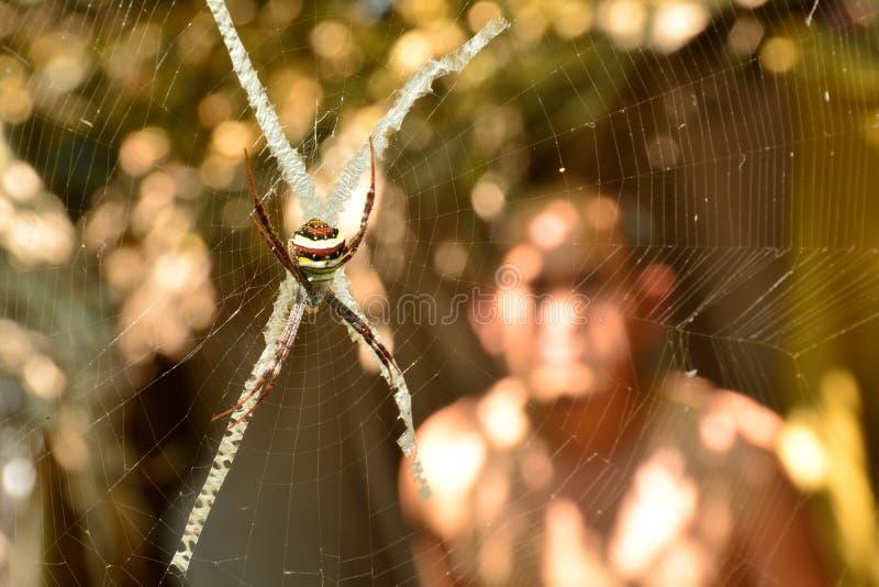 Spinne auf dem Netzblick gruselig und furchtsam auf Naturhintergrund stockbilder