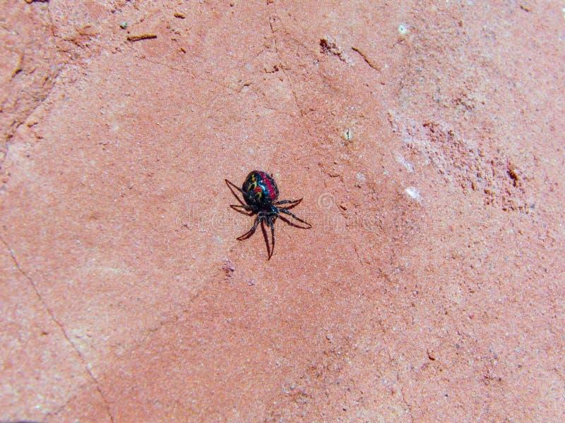 Spinne auf dem Sand lizenzfreies stockfoto
