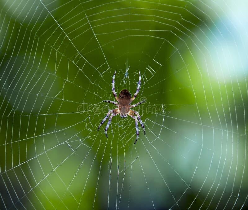 Spinne auf dem Web lizenzfreies stockfoto