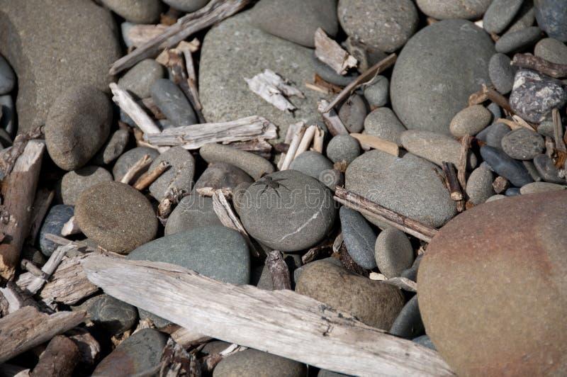 Spinne auf den Felsen stockfoto