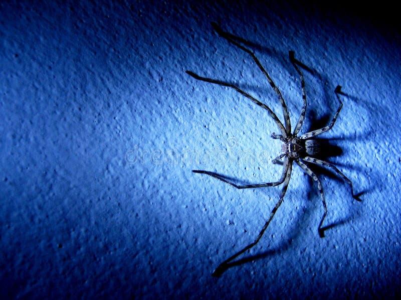 Spinne auf der Wand stockbild