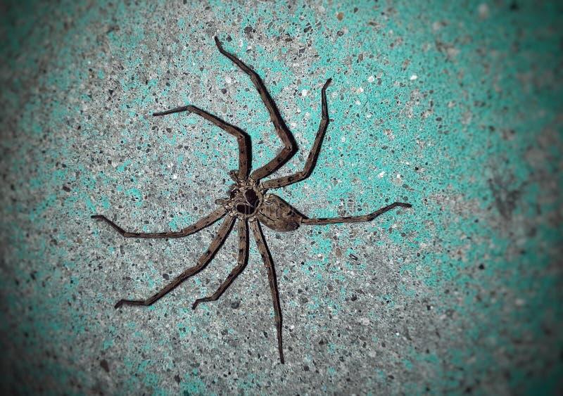 Spinne auf der Wand lizenzfreies stockbild