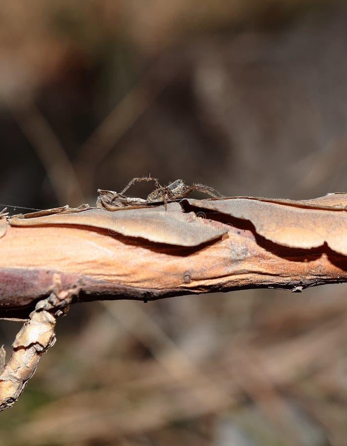 Spinne auf einem Baum an einem Tag der heißen Quelle lizenzfreie stockfotos