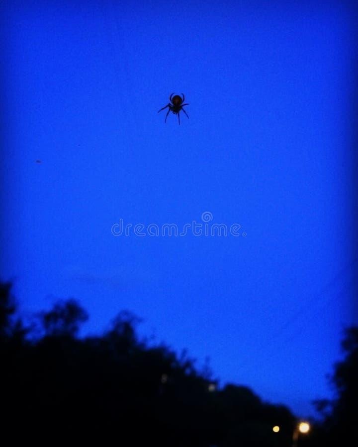 Spinne auf einem blauen Hintergrund stockfotos