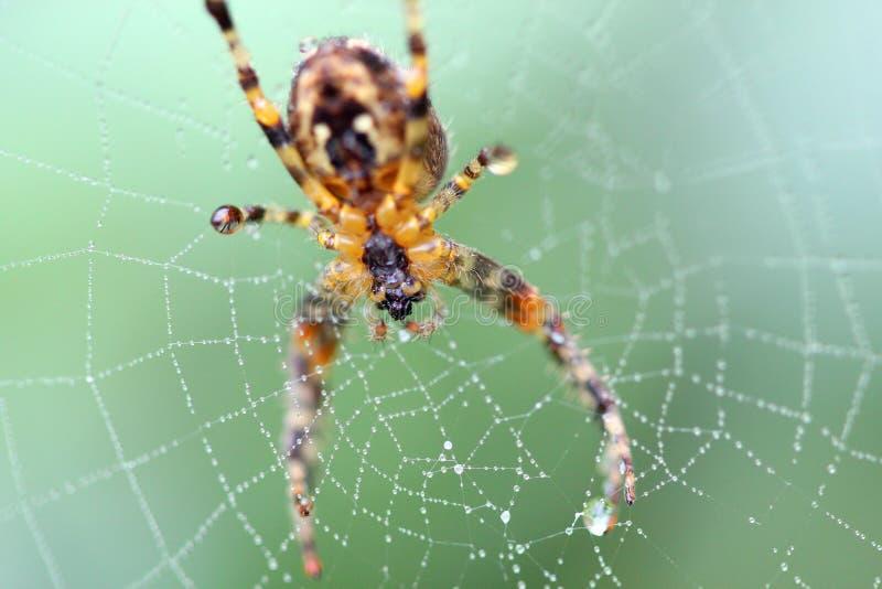 Spinne auf einem Netzmakro lizenzfreie stockbilder