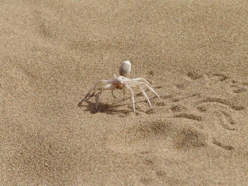 Spinne auf einem Sand. stockbild