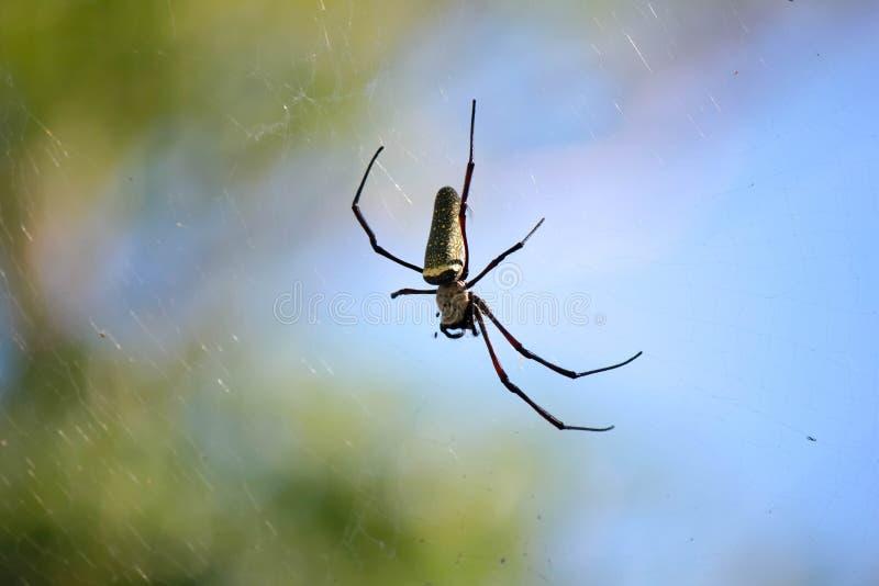 Spinne auf einem Spinnennetz mit einem grünen Hintergrund stockfotos