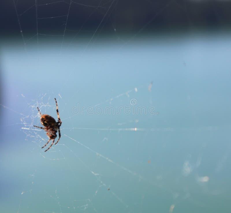 Spinne auf Netz im Bayern, Deutschland stockbilder